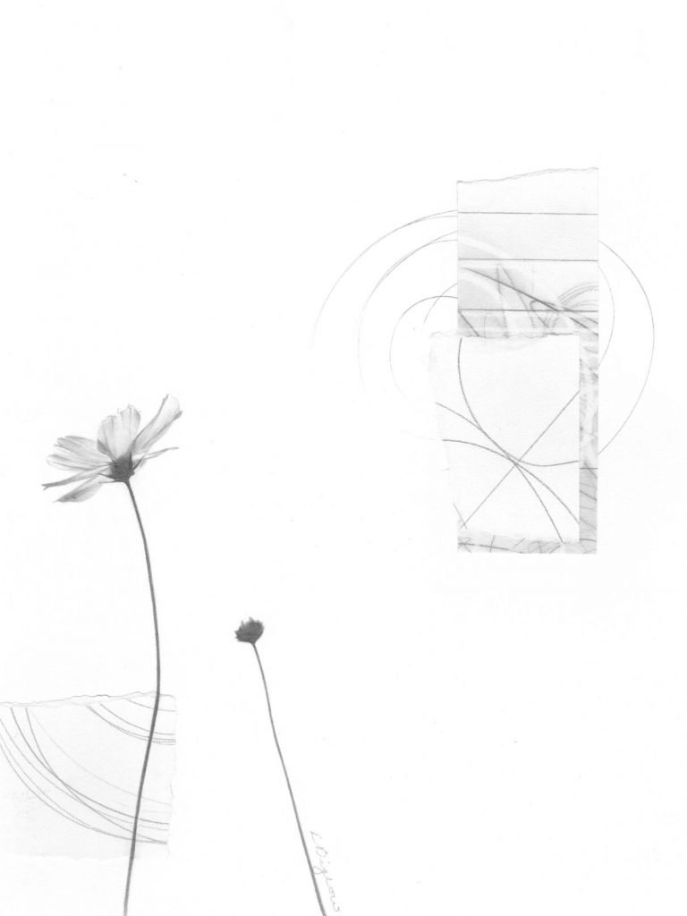 Bloom No. 8 | Graphite Drawing and Collage
